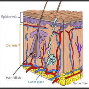 Do pores on the skin need to breathe?