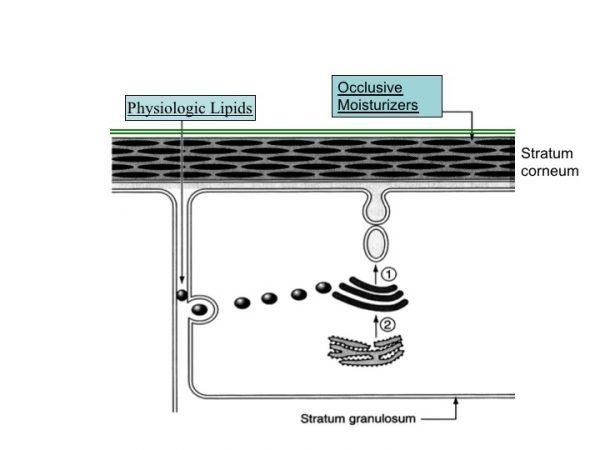 moisturizers vs barrier repair lipids
